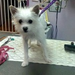 Photo of Groomed Buttercup