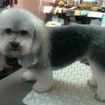 Riley after grooming!